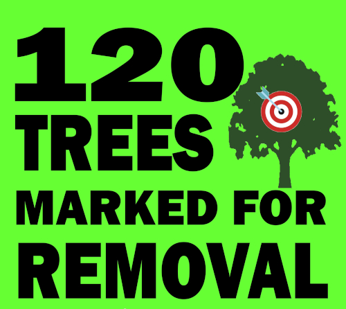 120 trees marked for removal